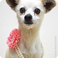 Adopt A Pet :: Zara - Dublin, CA