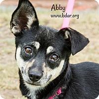 Pekingese/Chihuahua Mix Dog for adoption in Cheyenne, Wyoming - Abby
