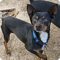 Adopt A Pet :: Jake - Grand Rapids, MI