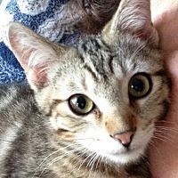 Adopt A Pet :: Prince - Saint Robert, MO