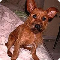 Adopt A Pet :: FRANKIE - Hollywood, FL