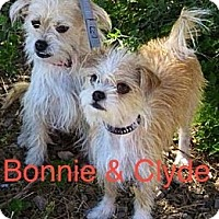 Adopt A Pet :: Bonnie and Clyde - Scottsdale, AZ