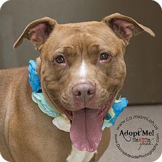 Pit Bull Terrier Dog for adoption in Troy, Ohio - Nina
