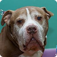Adopt A Pet :: Winston - Evansville, IN