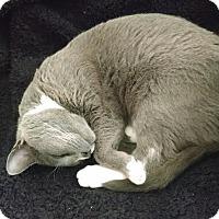 Adopt A Pet :: Bon Bon - Harrisburg, NC