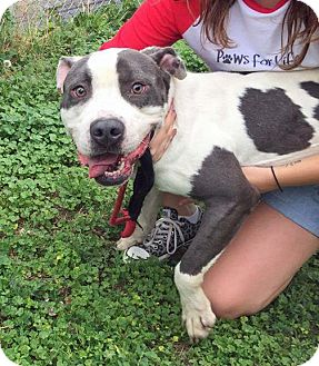 Adopt A Pet :: Jesse  - Troy, MI
