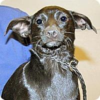 Chihuahua Mix Dog for adoption in Wildomar, California - Moonshadow