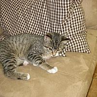Adopt A Pet :: Nora - Colfax, IL