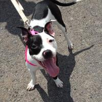 Adopt A Pet :: Bessie - Salem, OH