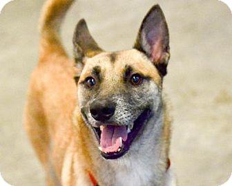 Shepherd (Unknown Type) Mix Dog for adoption in San Francisco, California - Ares