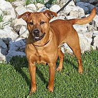 Adopt A Pet :: Coraline - Joliet, IL