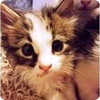 Adopt A Pet :: Shelly - Warren, OH