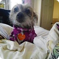 Adopt A Pet :: China - Mt Gretna, PA
