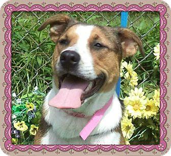 Hound (Unknown Type) Mix Dog for adoption in Marietta, Georgia - CHERISH - adopted @ off-site