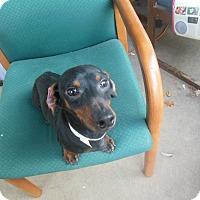 Adopt A Pet :: Harley - Cincinnati, OH