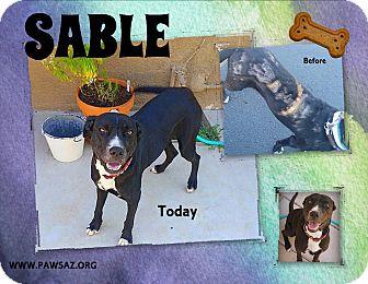 Labrador Retriever Mix Dog for adoption in Higley, Arizona - SABLE