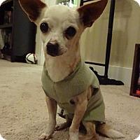 Adopt A Pet :: Hercules - North Bend, WA