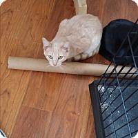 Adopt A Pet :: Ron - Fairborn, OH