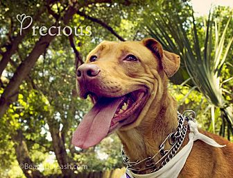 Rhodesian Ridgeback Mix Dog for adoption in Jacksonville, Florida - Precious