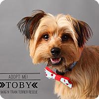 Adopt A Pet :: Toby - Omaha, NE