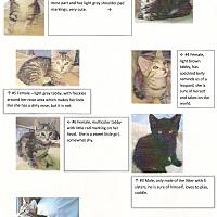 Adopt A Pet :: Kittens - Halifax, NS