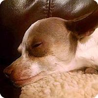 Adopt A Pet :: Red Rover - Scottsdale, AZ