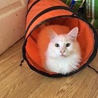 Adopt A Pet :: RHETT - Washington, NC