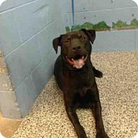 Adopt A Pet :: A503527 - San Bernardino, CA