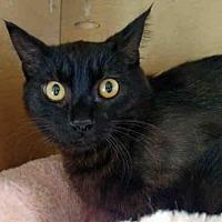 Adopt A Pet :: RYAN - San Clemente, CA