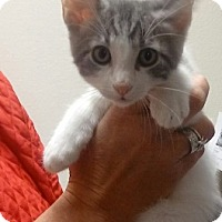 Adopt A Pet :: Chickie - Divide, CO