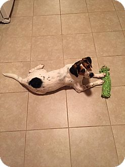 Beagle Mix Puppy for adoption in Hopkinsville, Kentucky - Neji