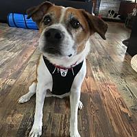 Adopt A Pet :: Aubry - Portland, OR
