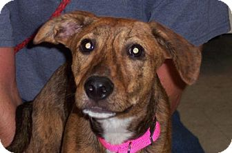 Terrier (Unknown Type, Medium) Mix Dog for adoption in Guthrie, Oklahoma - Dimples