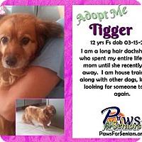 Adopt A Pet :: Tigger - Bealeton, VA