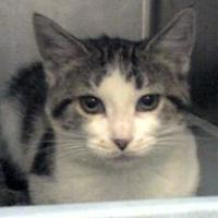 Adopt A Pet :: Mecca - Indianapolis, IN