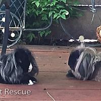 Adopt A Pet :: Xavier & Peter - Livermore, CA