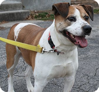 American Bulldog Mix Dog for adoption in West Des Moines, Iowa - Marley