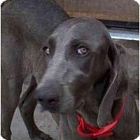 Adopt A Pet :: Leah  **ADOPTED** - Eustis, FL