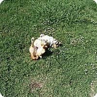 Adopt A Pet :: Sheila - Inola, OK