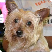 Adopt A Pet :: Kiwi - Greensboro, NC