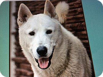 Husky Mix Puppy for adoption in Los Angeles, California - LAZER VON LOSSEN