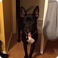 Adopt A Pet :: EMMA JEAN - Odessa, FL