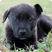 Adopt A Pet :: Jesse James - Austin, TX