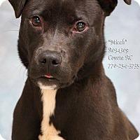 Adopt A Pet :: Micah - Newnan City, GA