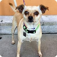 Adopt A Pet :: Heidi - Santa Ana, CA