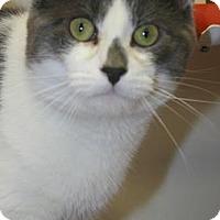 Adopt A Pet :: Theodore - Potsdam, NY