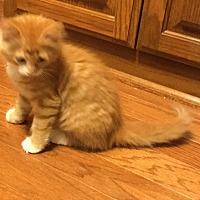 Adopt A Pet :: Fiero - Yukon, OK