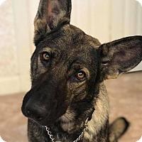 Adopt A Pet :: Vixen - Ormond Beach, FL