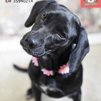 Adopt A Pet :: Caroline - Lonely Heart - Gulfport, MS