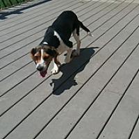 Adopt A Pet :: Matilda - Tuskegee, AL